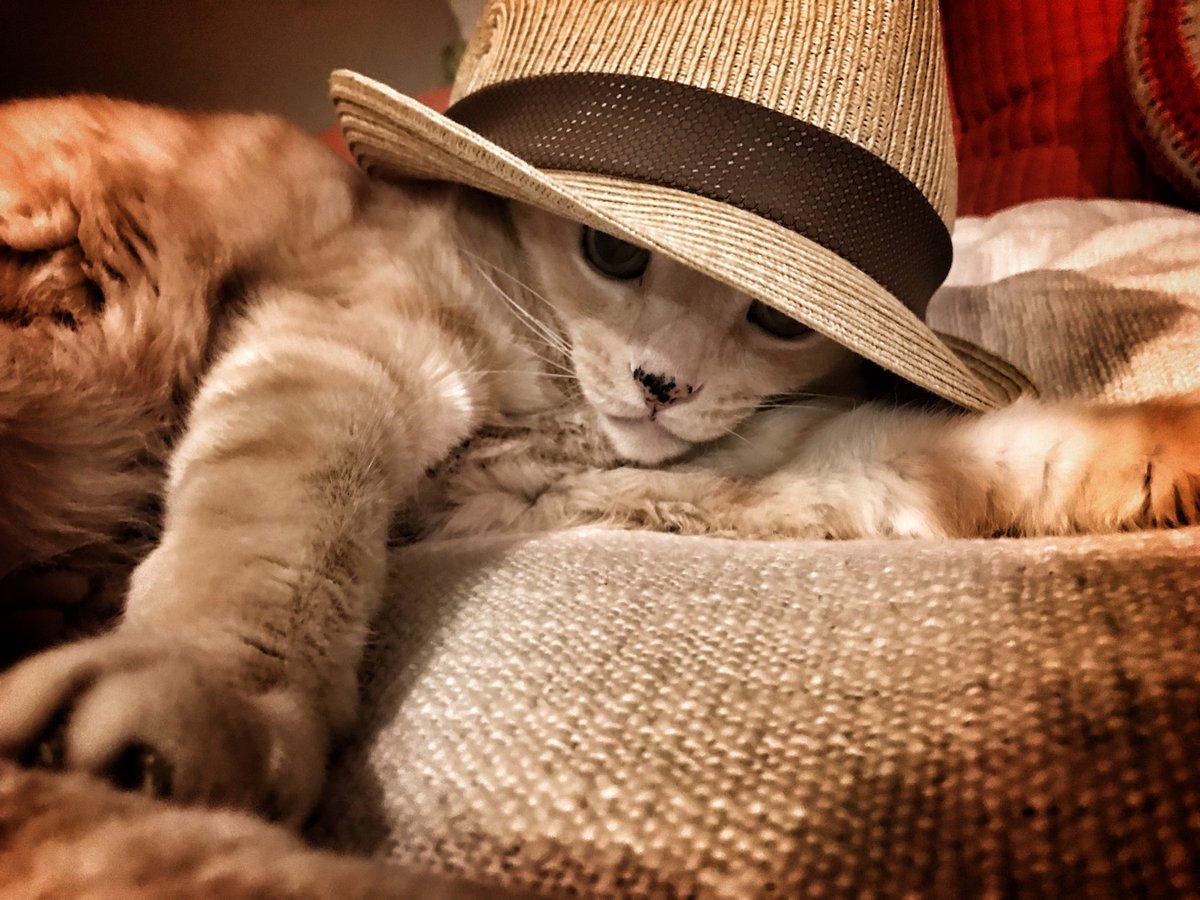 CAT:WFC