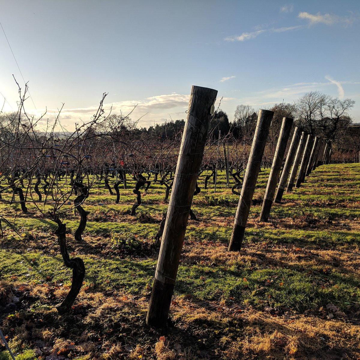 Beautiful day out at Chapel Down Winery in Kent, UK. Who has tried English wine before? Any thoughts? #wine #ilovewine #englishwine #kent #bacchus #sparklingwines #whitewine #ddk <br>http://pic.twitter.com/nsivKkDjdC