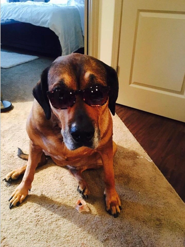 Buckhead Paws On Twitter Last Week We Mourned The Loss Of A Very