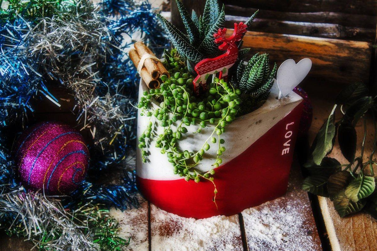 In arrivo composizioni di #succulente per #Natale per un un augurio speciale, #ecologico e #green. #Paganopiante ha sviluppato idee simpatiche con diverse varietà di #piantegrasse in vasi di #ceramica o latta. https://t.co/mAK8tY4eEw https://t.co/4UL37vTqgT