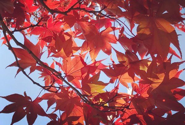 紅葉きたーっ! 誰でもステキな紅葉写真が撮れちゃうコツ4つ|スマホ撮影テク #27 | ananweb - マガジンハウス https://t.co/oBZgBep8J5