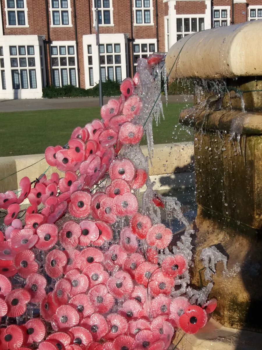 Iced poppies in the fountain this mornin...