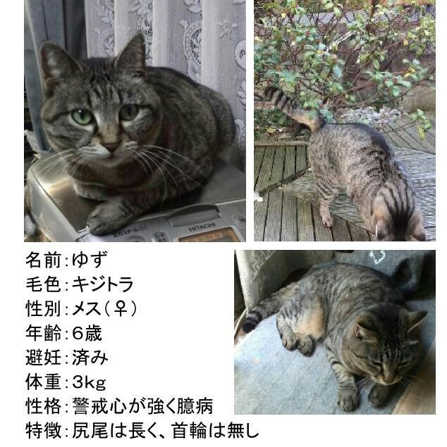 迷い 猫 保護