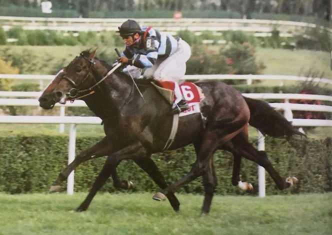 HorseTurk 6 yaşında