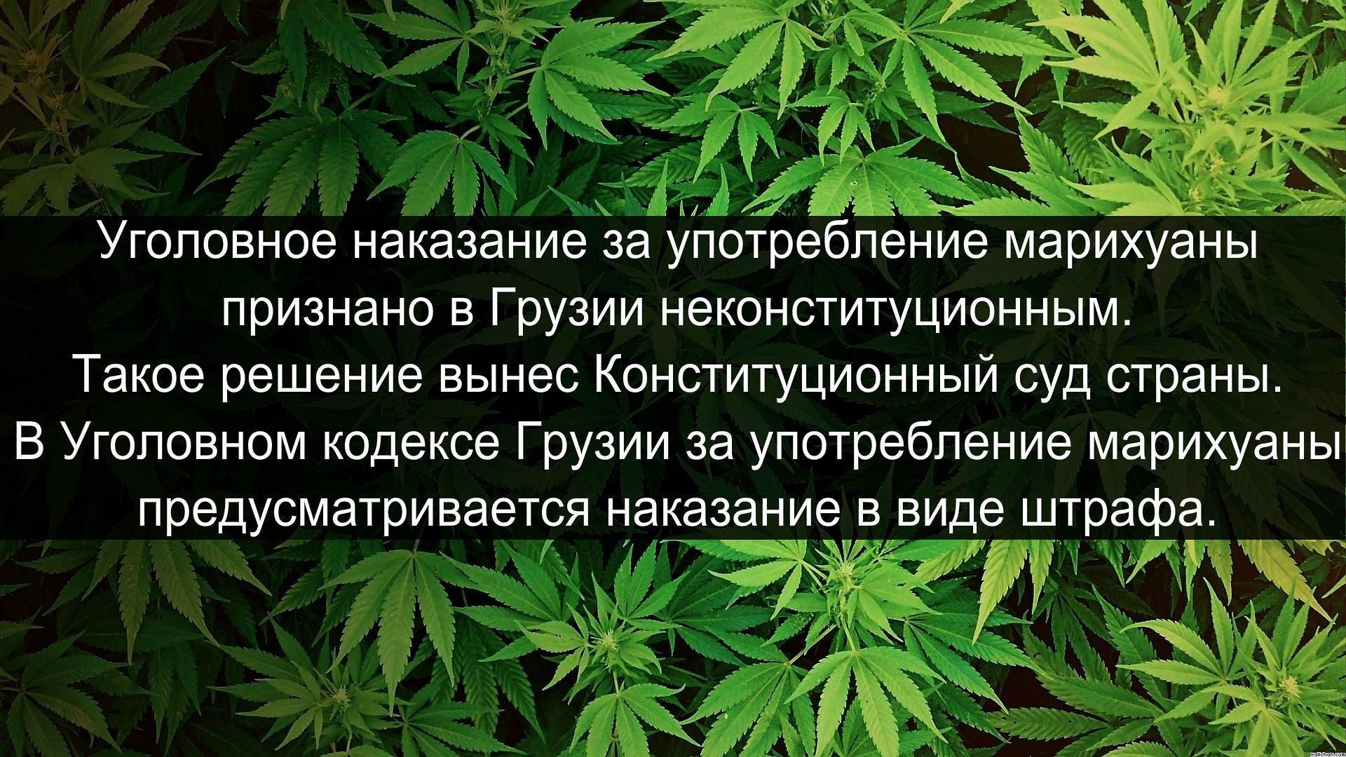 Марихуану назад курил неделю марихуане кадмий в