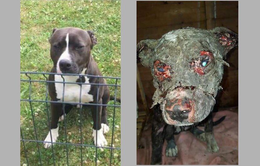 🇫🇷 #Nord Maltraité, un chien est découvert vivant en état de décomposition avancée. https://t.co/rQ1KBzbPjC
