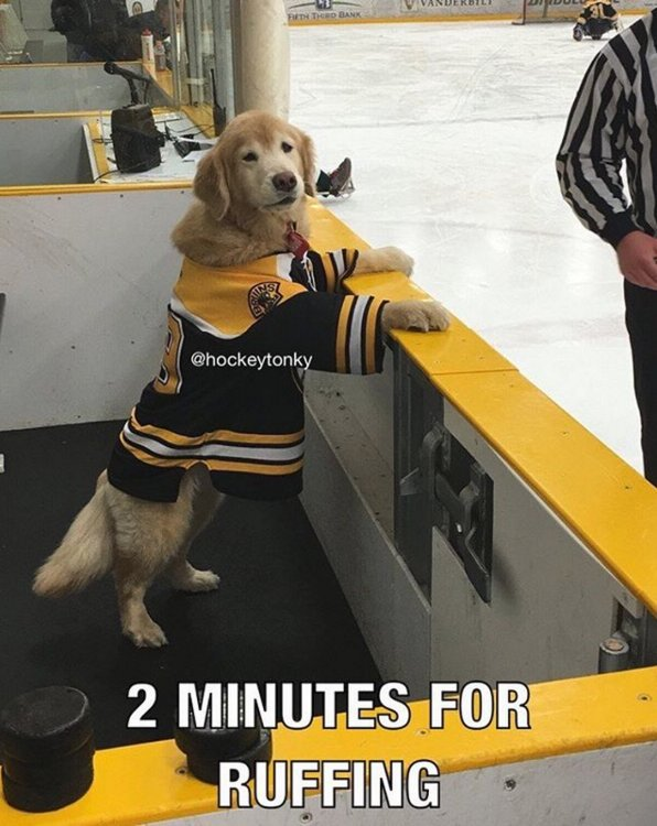 2 minutes for ruffing... https://t.co/EA84CGcu4J
