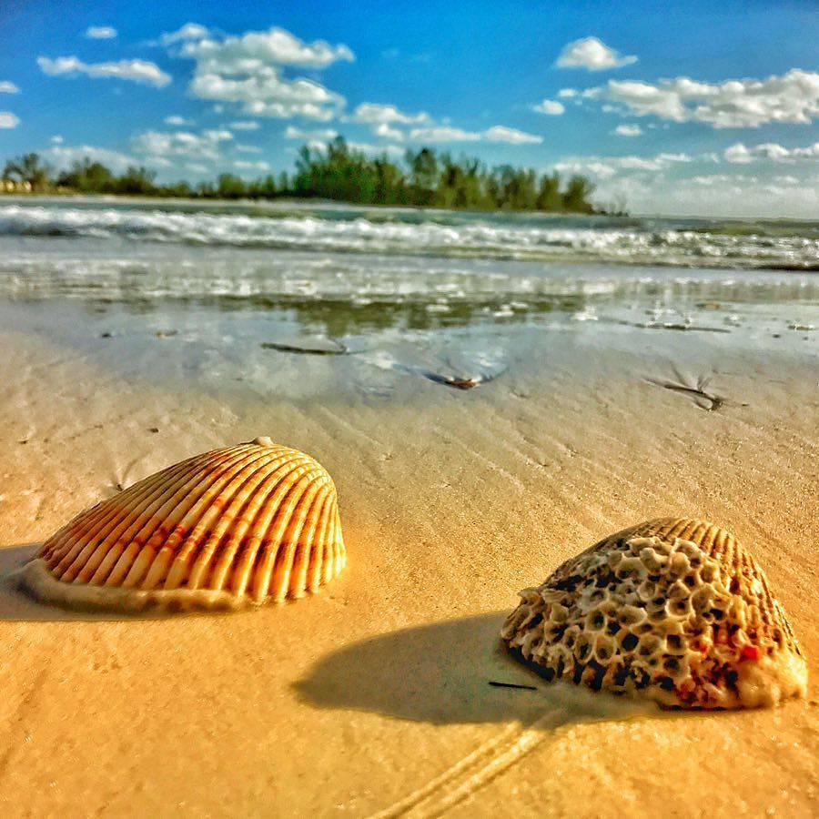 Shells in the surf #SundayFunday #LoveFL...