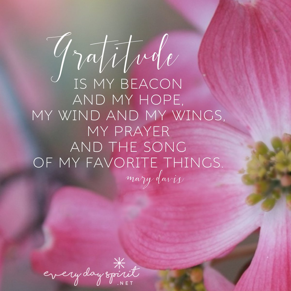 Walk on the path of contentment with gratitude in your heart and soul.  #JoyTrain #Thanksgiving #gratitude  xo  http://www. everydayspirit.net  &nbsp;   xo<br>http://pic.twitter.com/dA0VV6tnyY