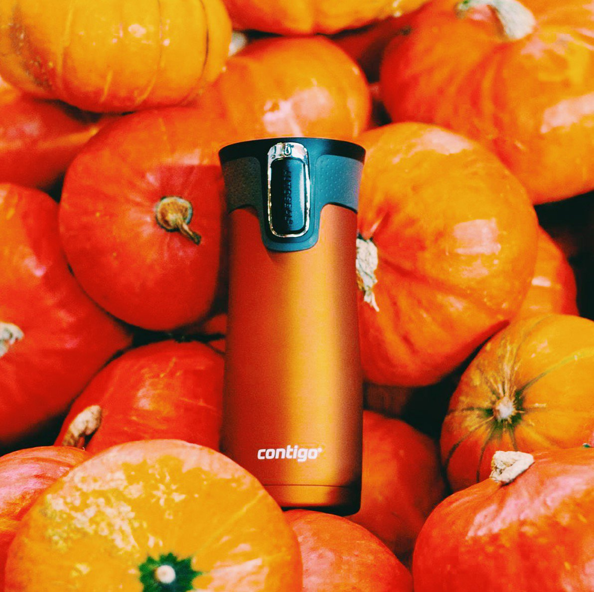 Spot the @gocontigo   #contigo #insulated #west #loop #westloop #water #bottle #waterbottle #beverage #drink #orange #pumpkin #no #spills<br>http://pic.twitter.com/RuhUIGOxKi