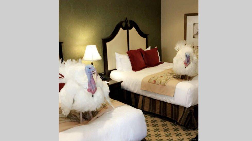 Turkeys arrive in Washington for White House pardoning ceremony https://t.co/cQr7G7LqtG https://t.co/EJ5z1God0i