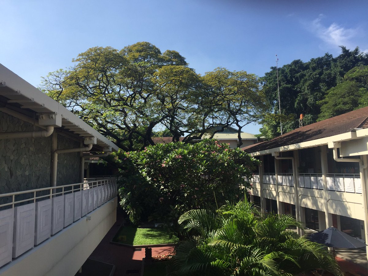 One of those days... the gorgeous Pattimura Tree @JISElementary @JISofficial #pel <br>http://pic.twitter.com/Ugb6UIoRmB