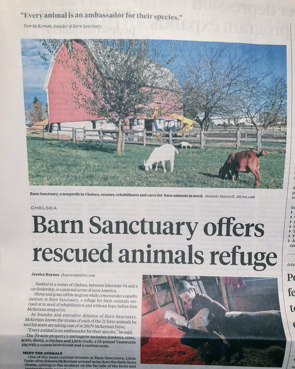 Great to see @BarnSanctuary get some lov...