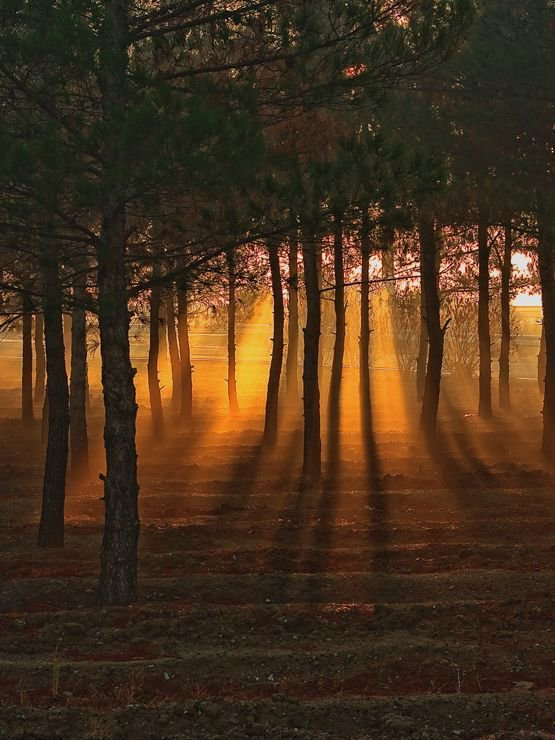 """""""There's nothing worse for a forest than to have all the trees be the same.""""  —Ken Kesey #writing #screenwriting #film #Art Ajjadesa <br>http://pic.twitter.com/7FAE5S4a3p"""