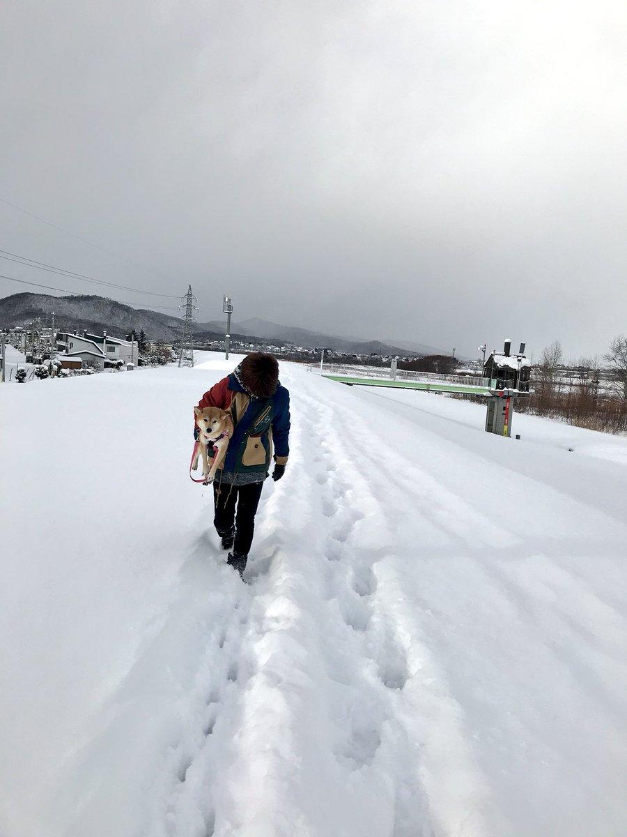 #じわじわくる柴犬を無言であげる見た人もやる  北国育ちのくせに。散歩にならない...