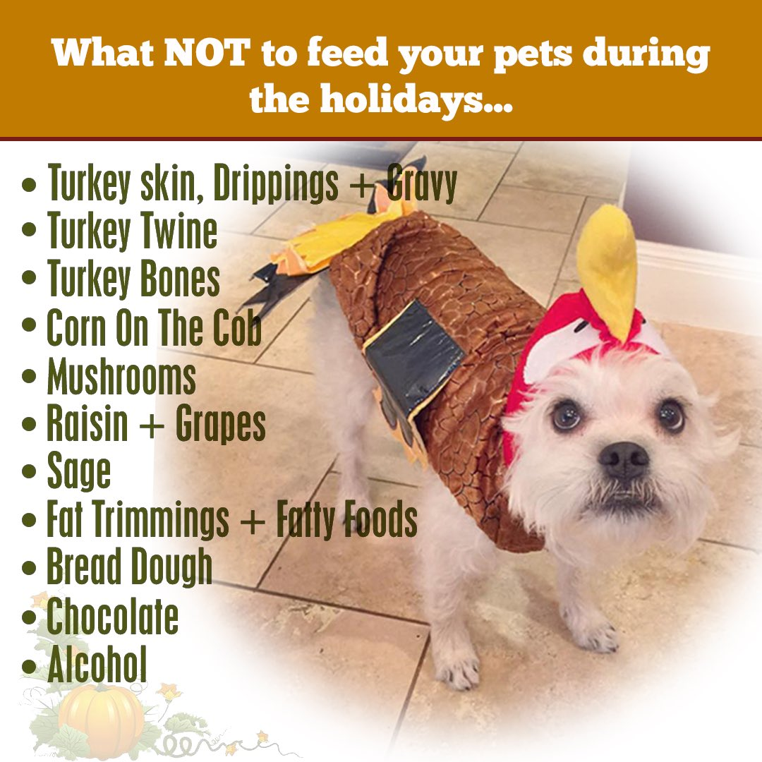 Keep your pets safe, and avoid giving all of these foods over the Thanksgiving holiday. Spread the word.  RT #Thanksgiving #Austin <br>http://pic.twitter.com/il4eMSeqvG