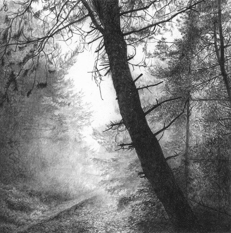 New Arborealist Paul Newman&#39;s wonderful tree drawings, #art #drawing #trees <br>http://pic.twitter.com/ttx6eZY9lB