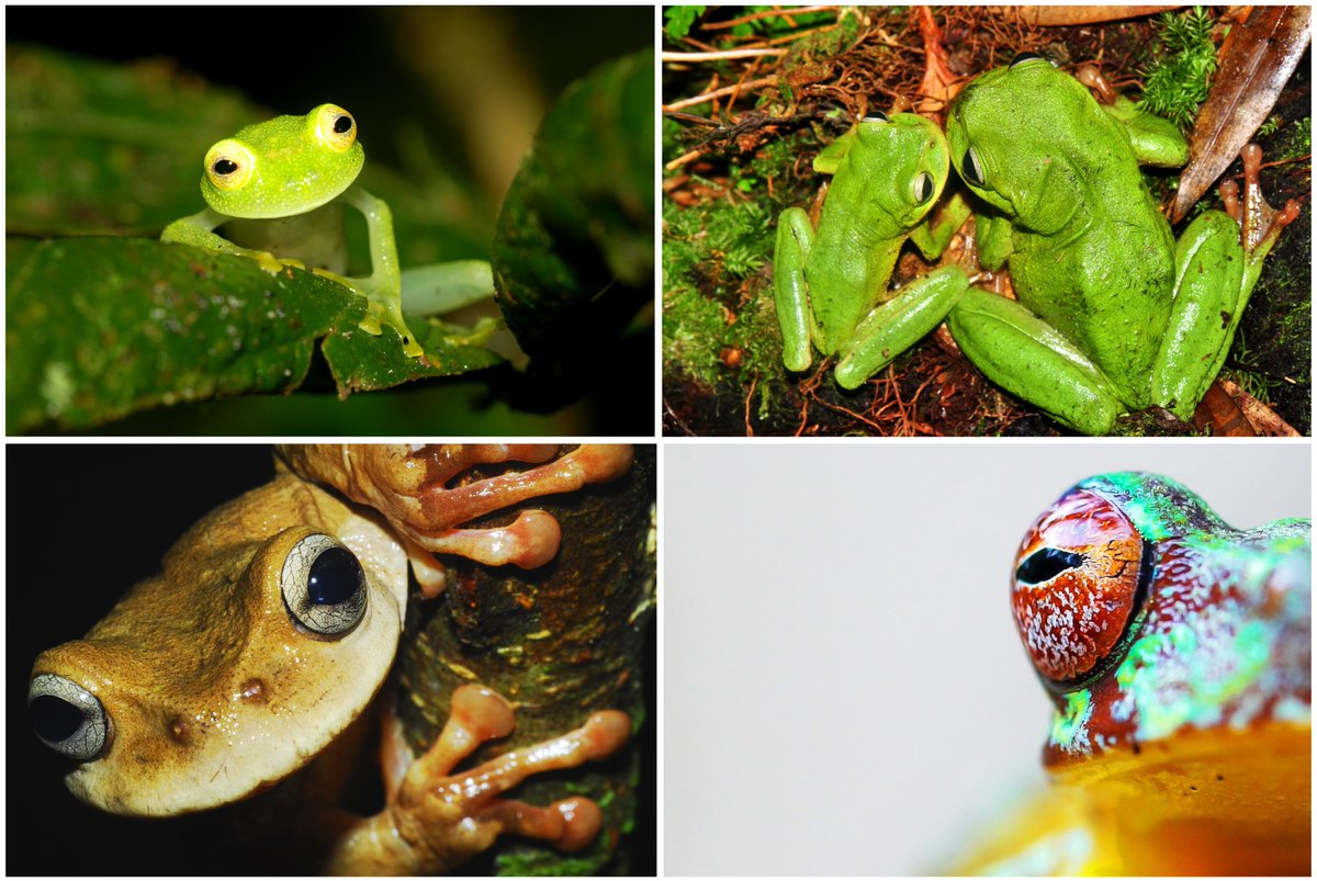 #ThanksgivingWeek is the perfect time to request your frog rescue calendar! Share some #frog smiles this season &amp; support #wildlife conservation! Available at:  http://www. frogrescue.com/gifts/  &nbsp;    #MondayMotivaton<br>http://pic.twitter.com/y1t2QuVuZp