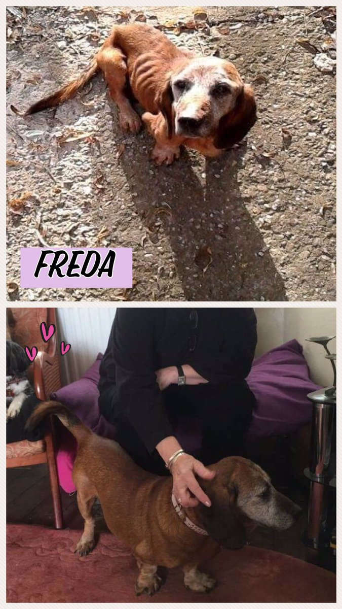 Freda maybe old, but she deserved her chance too. #adoptdontshop <br>http://pic.twitter.com/X8D6p0p7Jb