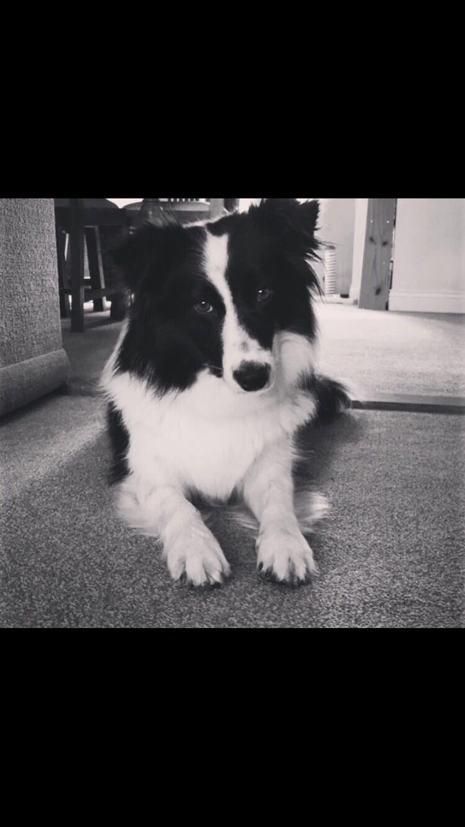 Our gorgeous rescue collie. She's still really timid and gets scared so easily, but we adore her and she's made such a wonderful difference to our home @BCTGB @DogsTrust @RSPCA_official #AdoptDontShop #RescueDogs #rescuedogsofinstagram #mansbestfriend<br>http://pic.twitter.com/ovqgbNOj6O