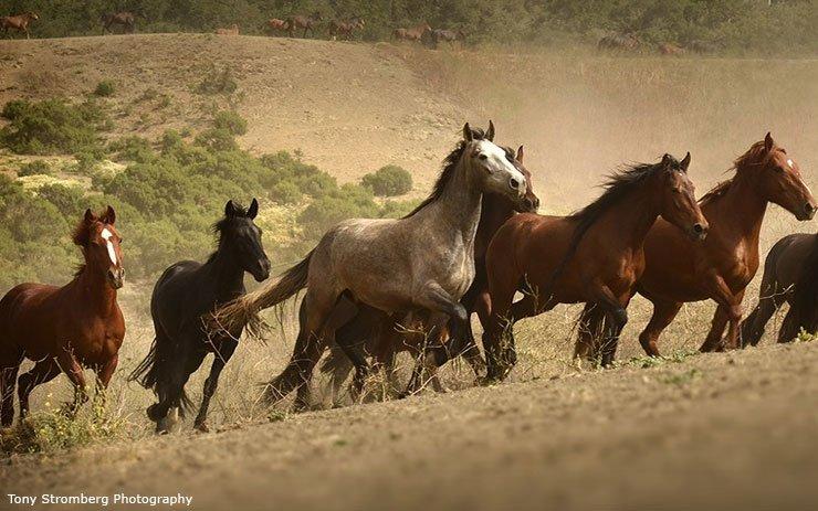 Senate takes crucial step toward protecting #wildhorses and burros!  http:// returntofreedom.org/2017/11/20/sen ate-takes-crucial-step-toward-protecting-wild-horses/ &nbsp; … <br>http://pic.twitter.com/az0Kp61xex