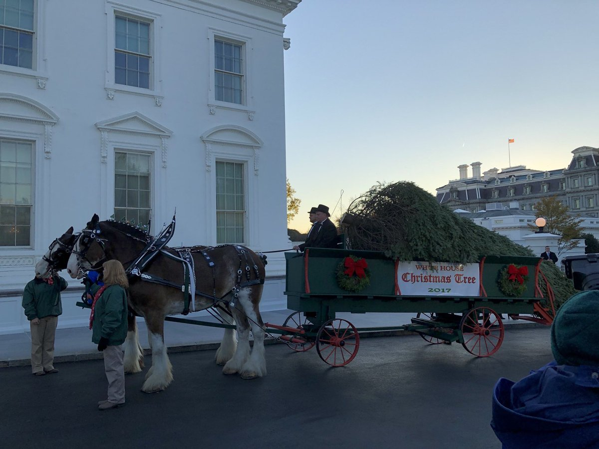Inaugural #ChristmasTraditions now beginning at .@POTUS .@realDonaldTrump .@WhiteHouse, as the #WhiteHouse #Christmas Tree has arrived today, welcomed by .@FLOTUS #MelaniaTrump and son Barron! Wishing YOU A #MAGA #MerryChristmas and A #HappyThanksgiving #ProudAmerican #FoxNation<br>http://pic.twitter.com/ldQPxqb8vs