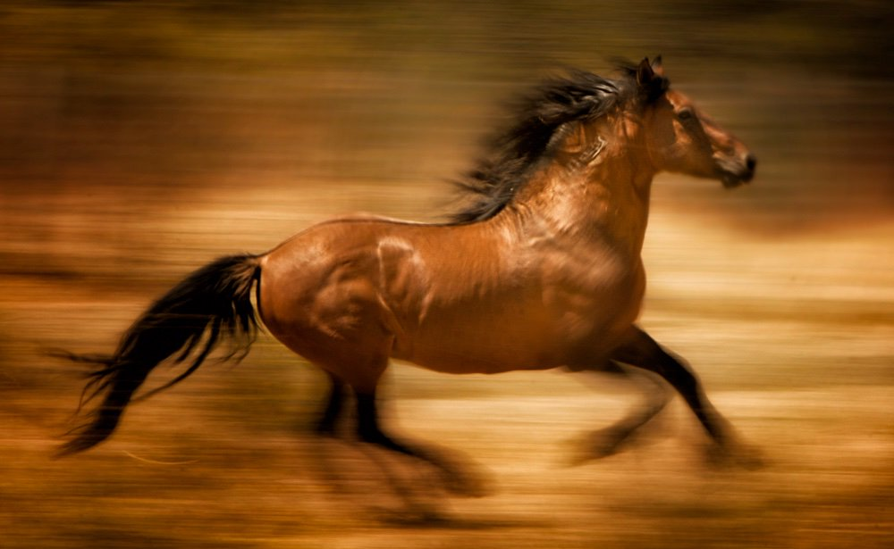 RTF statement on the inclusion of protective language for #wildhorses and burros in Senate bill:  http:// returntofreedom.org/2017/11/21/rtf -statement-on-protective-language-for-wild-horses-in-senate-bill/ &nbsp; …  Photo: Bev Pettit<br>http://pic.twitter.com/PqPa9OZ9Ec