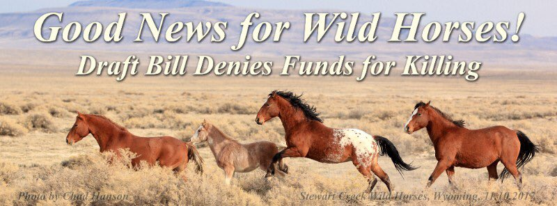 HAPPY THANKSGIVING TO YOU ALL!  And thank you for your thousands &amp; thousands of phone calls to the Senate about our #wildhorses. Thank you @SenatorTomUdall and @lisamurkowski for your leadership in the Senate. Find out more about what happens now!  http:// mailchi.mp/thecloudfounda tion/breaking-senate-draft-bill-denies-funds-for-killing?e=04a2882203 &nbsp; … <br>http://pic.twitter.com/AyhWRT0eHa