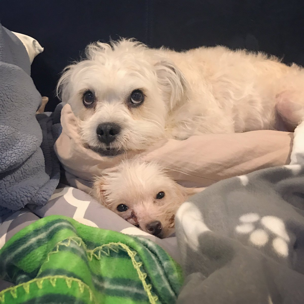 Just watching over her, like a good foster bro is supposed to do. Goodnight and sleep tight, Lil&#39; Kim. We got ya.  #fosterdog  #austin <br>http://pic.twitter.com/RCrONXy2pp