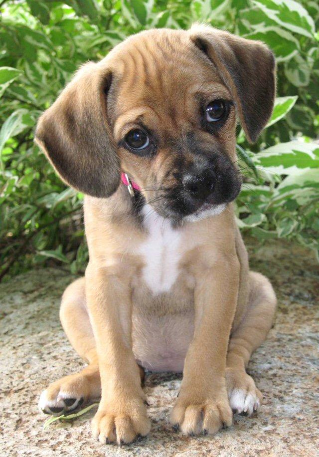 Dogs are the head tilt masters! #dogsarelove <br>http://pic.twitter.com/UR5OSG9z5b