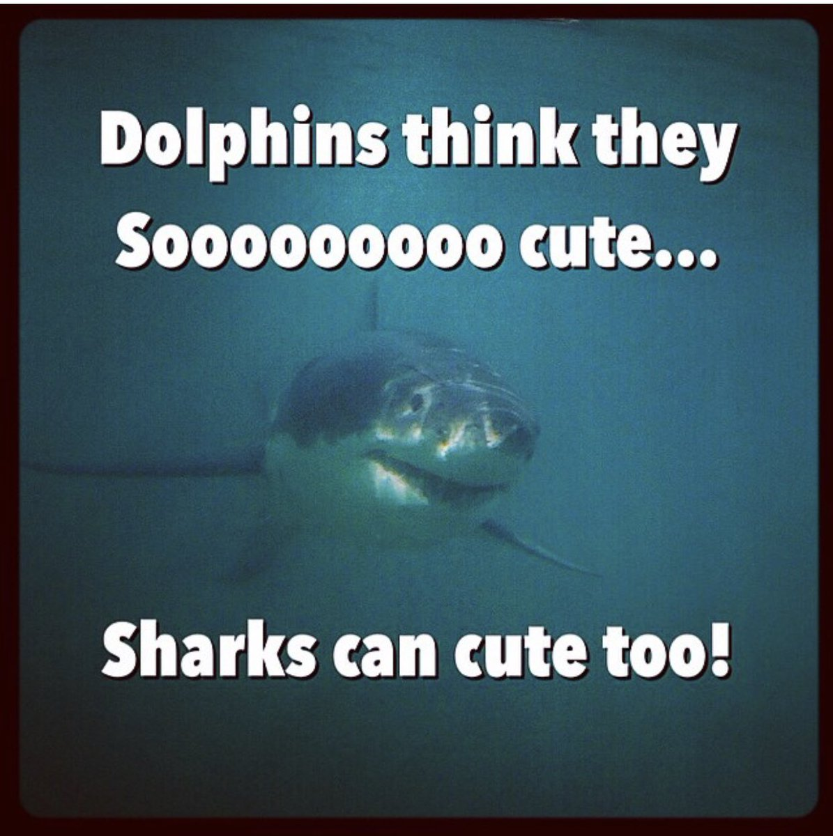 RT @RockStarLydia: Sharks can cute too! #TuesdayThoughts 🌊⚡️🎸 https://t.co/Mm8W7LGeue
