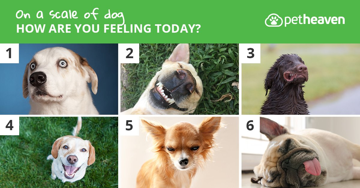 Image result for how are you feeling today pet heaven
