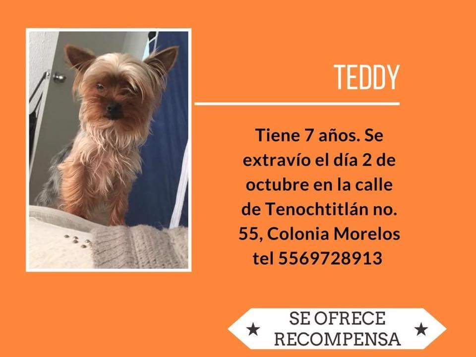 #Sebusca #Teddy colonia Morelos CDMX @PrrosPerdidosMX @amidoglove @PerdiMiMascota @perritoperdido1 @PpEncontradosMx @rumabo1 @l_orii<br>http://pic.twitter.com/HHhU64sowQ