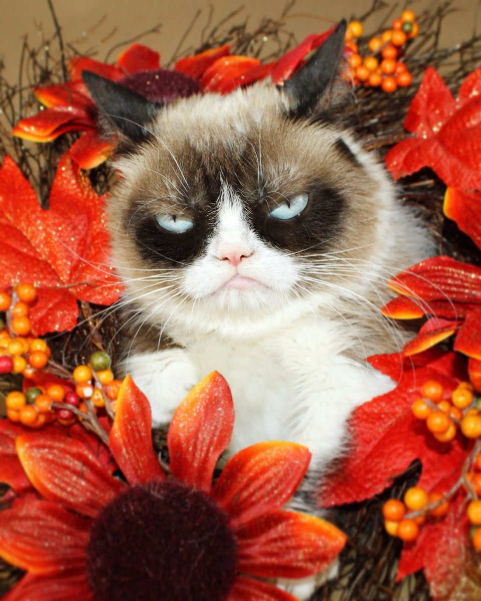 Cat: Grumpy Cat (@RealGrumpyCat)
