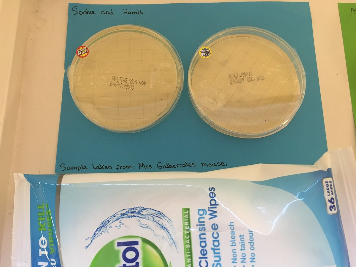 Year 6 are testing the products that claim they kill 99.9% of bacteria. Watch out for our updates! #realworldlearning #investigatingscience