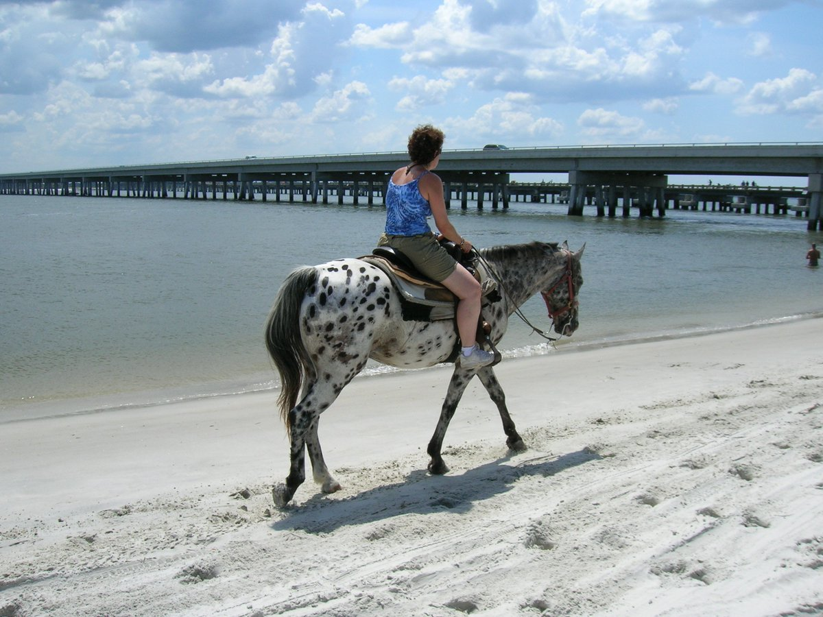 #ScavengerHunt! Ride horses on the beach...
