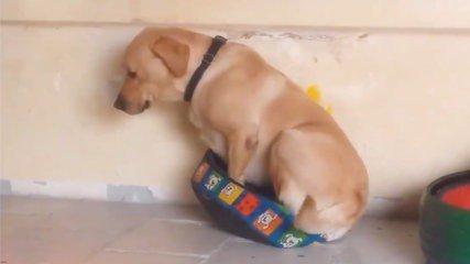 [INSOLITE] Un panier pas tout à fait à la taille du #chien #video #insolite #animaux  https://t.co/bRkRXCXHAD