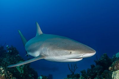 Experts gather on #Bonaire to investigate how best to protect #sharks https://www.infobonaire.com/?p=13721 #InfoBonaire #BonaireInsider #bonairenature #bonairesharks #sharkprotection #yarari #naturepic.twitter.com/yO2FlLhH9G