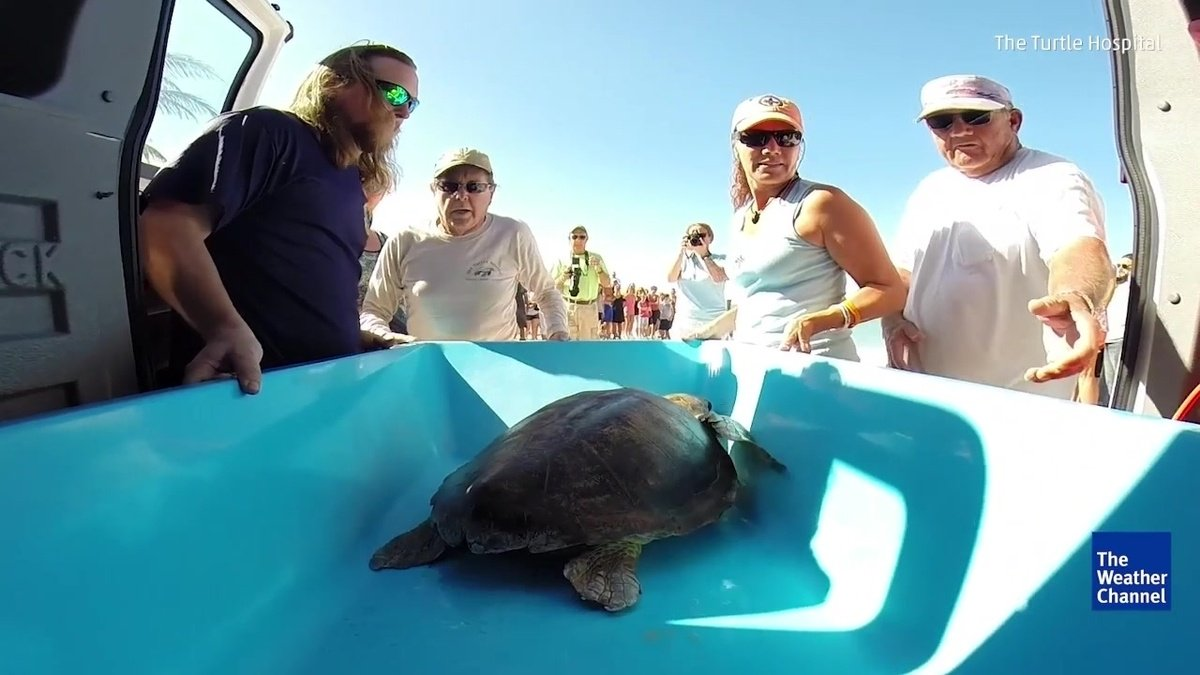 Just keep swimming: Sea turtle released back into the waves https://t.co/3SbwuaNvAr