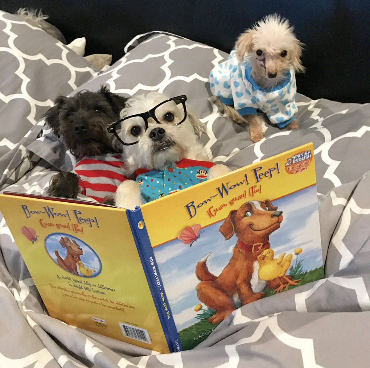 Hey, you interrupted story time. I was just getting to the part where the rescue dog finds a forever home!  #austin <br>http://pic.twitter.com/wbmYVmXSwe