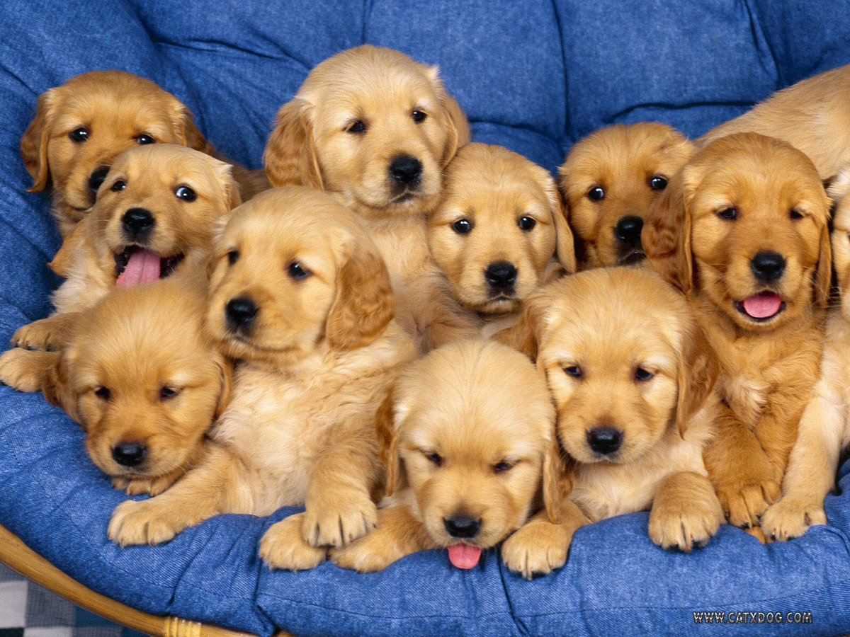 I&#39;d love to live in a land of puppies. #dogsarelove <br>http://pic.twitter.com/wa7m1sQLbX