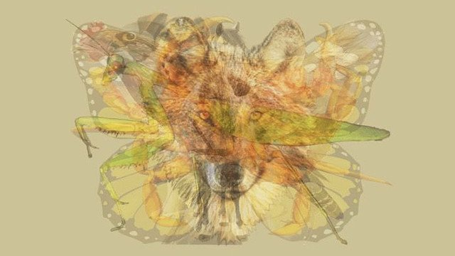 【絵から判断】真っ先にどの動物が見えるかをもとに性格を診断する「Meaww」のテスト https://t.co/HcexEQnuhr  野心的で優しい、忍耐強い、ブレずに進む努力家、などのタイプが分かります…みなさんには何が見えますか?