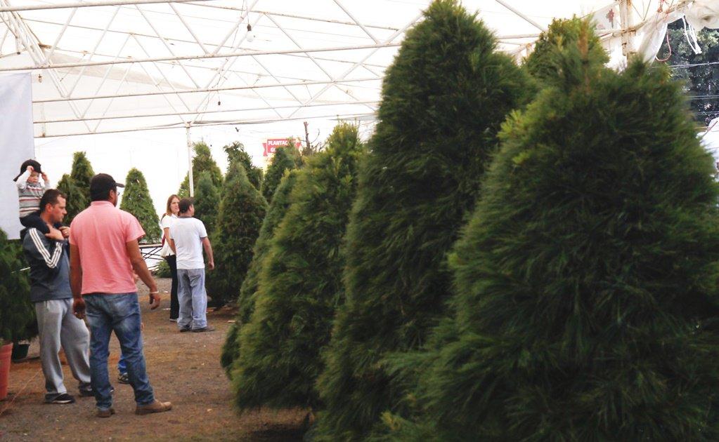 A la venta, árboles de Navidad capitalin...