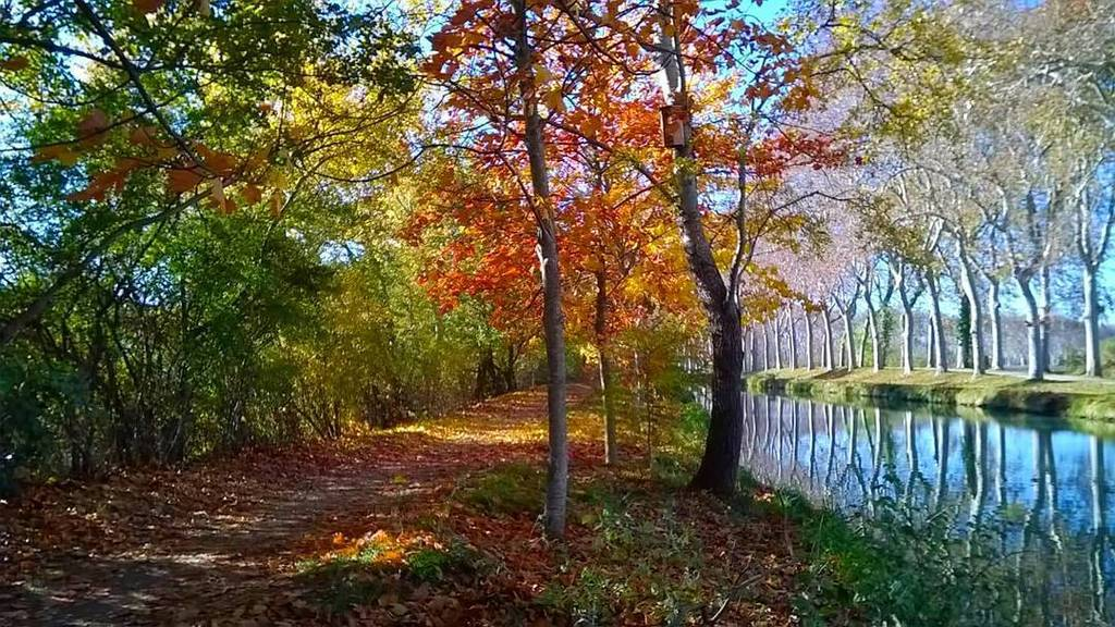Canal du Midi  #tourismehg #occitanie #mahautegaronne #banlieue #magnifiquefrance #nature #instanature #naturelovers #canaldumidi #worldheritage #unesco #southoffrance #patrimoine #canal #green #autumn #automne #balade #jaimemaregion #tourismeoccitaniepic.twitter.com/guRTGO03MY