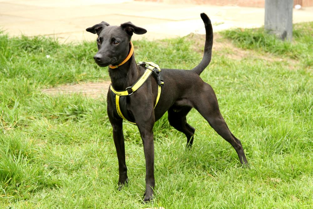 Happy #WaggyTailWednesday from the gorg-paws Enzo! Who is still looking for his fur-ever home! @DogsTrust #Wednesday #WednesdayMotivation #DogsTrust #Rehoming #ADIFL<br>http://pic.twitter.com/nX885tTTLY