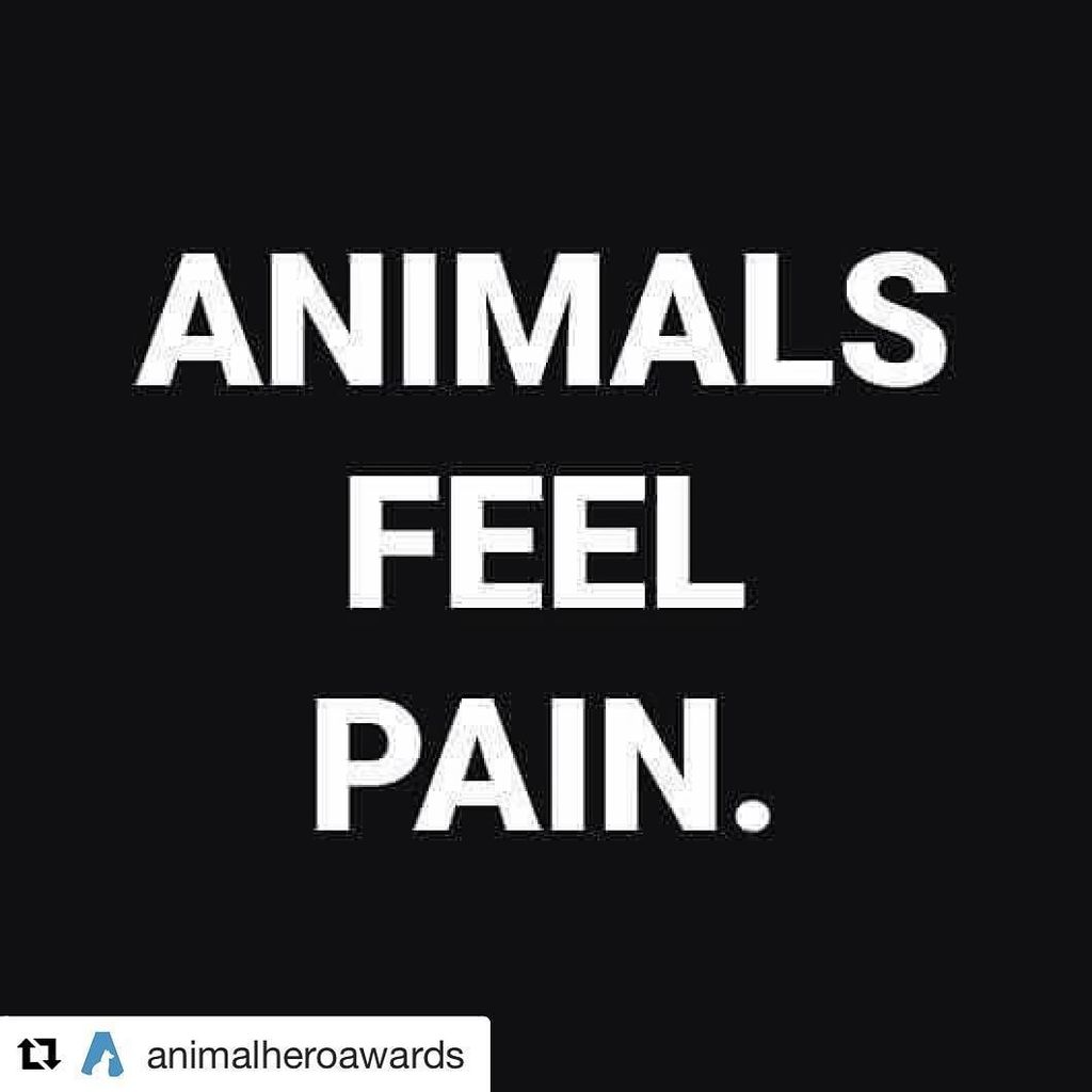 Absolutely bonkers that we are even in a situation that requires this to be posted. #Repost @animalheroawards (@get_repost) ・・・ This really isn't debatable, animals are sentient beings - write to your MP and take action! The animals need your voice. … https://t.co/wIZbDh8HiE https://t.co/gp0UryyMFC