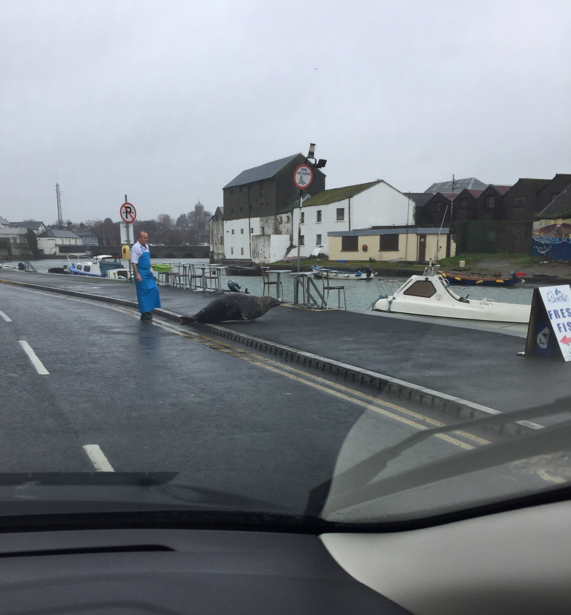 RT @Derek1052: Just witnessed this giant seal being chased out the door of a fishmongers shop in Wicklow town. https://t.co/WGlGxlAWfs