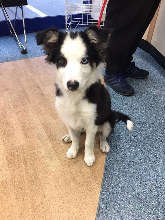 We love to see Bonnie at our surgery! She has grown so much since the last time :) #dogs #dogsarelove <br>http://pic.twitter.com/sPYLaekA94