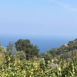 Metaxa is planting roots in Samos, Greece, as Muscat wine brings a taste of sunshine to our original Greek spirit. https://t.co/Rq1ROWR6nD @METAXA_Official