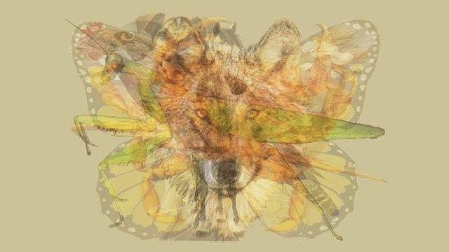 5000RT:【絵から判断】真っ先にどの動物が見えるかをもとに性格を診断する「Meaww」のテスト https://t.co/HcexEQnuhr  野心的で優しい、忍耐強い、ブレずに進む努力家、などのタイプが分かります…みなさんには何が見えま…
